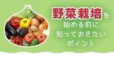 野菜栽培の仕事ってラク?始める前に知っておきたいポイント