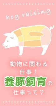 動物に関わる仕事がしたい!生命を感じる仕事、養豚飼育の仕事って?